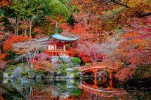 Autumn Daigo