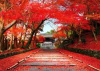 Autunm Leaves in Hokkaido