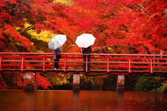 Koyo viewing in Japan
