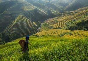 Terrace-farming
