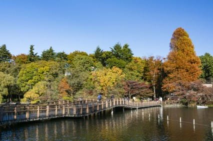 Inokashira-Park-View-Bridge-Lake