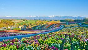 Flowers-in-Japan-in-Hokkaido